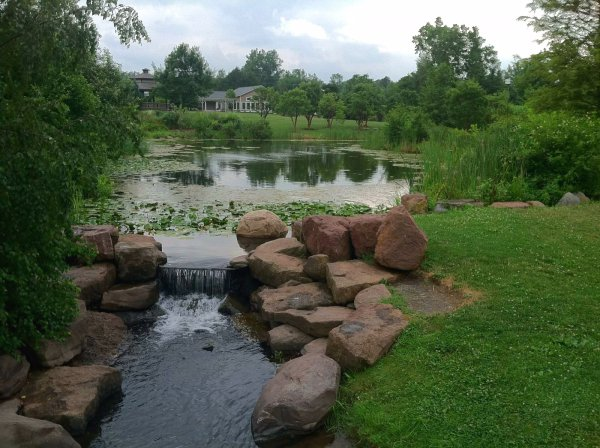 Looking back toward gazebo across waterfall and lilies of the pond