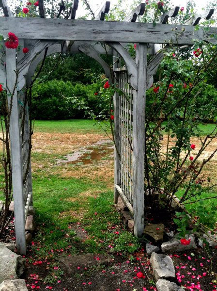Arbor, roses and petals on dark earth after summer rain