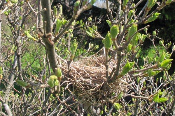 Ready for Nesting