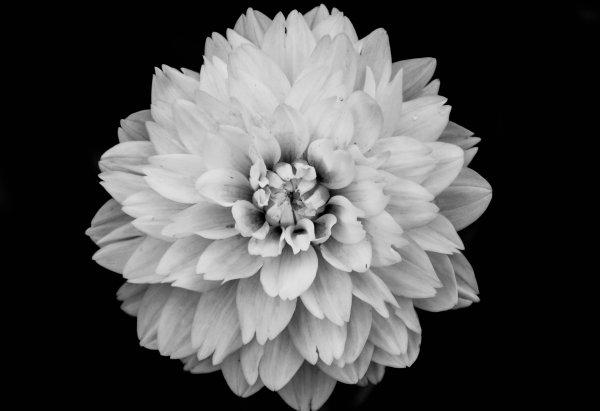 Portrait of a Flower